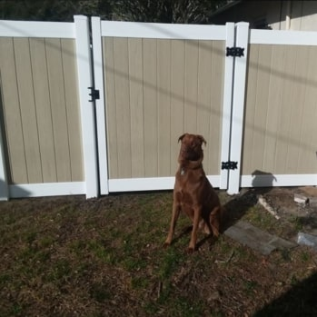 tan vinyl fence gate protected by dog